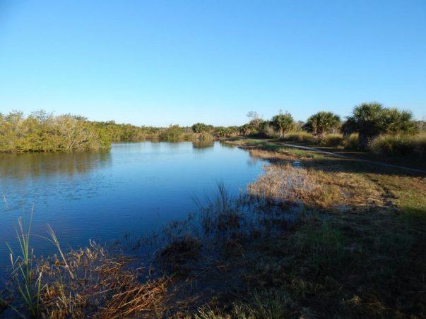 Bailey Tract: Ani Pond