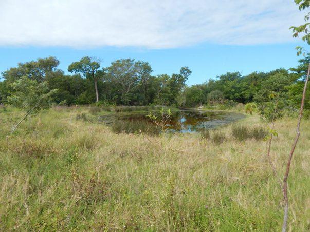 Sanibel Bayous Restoration Lake West