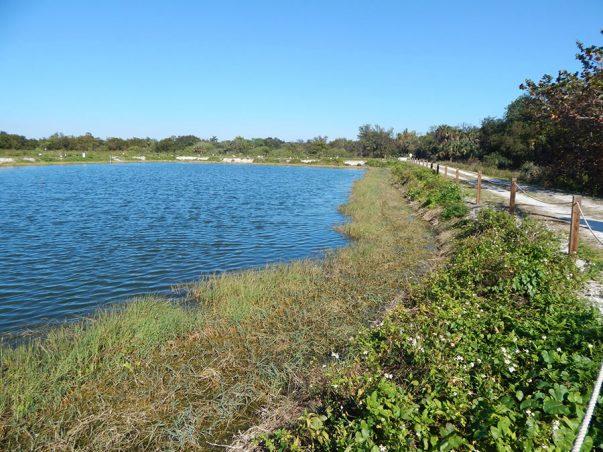 Pond Apple Park: Reuse Pond