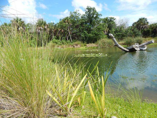 SCCF: Devitt Pond