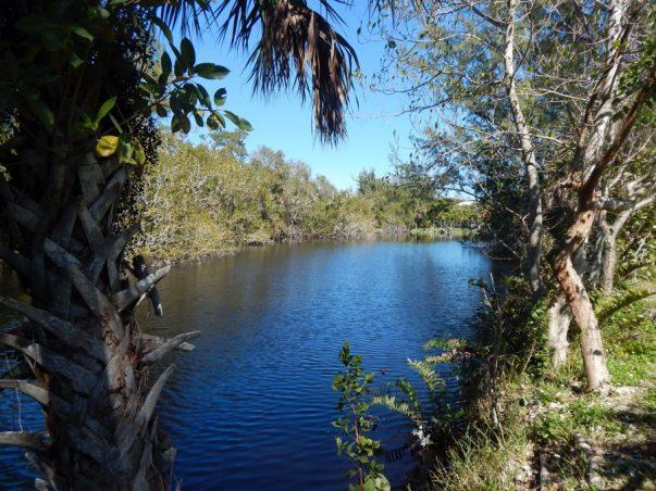 Gumbo Limbo: East Lake