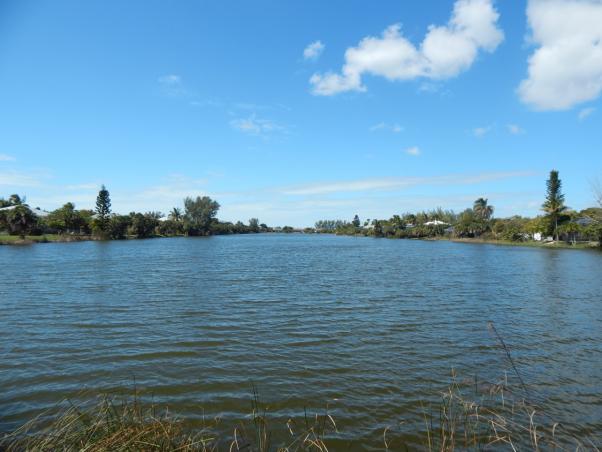 Little Lake Murex