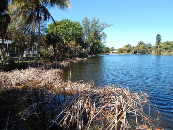 Palm Lake