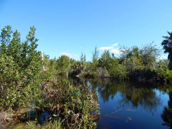Sanibel Woodlands