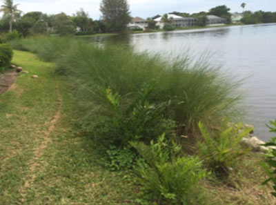After Littoral Planting