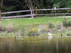 Wildilife / Pond Image