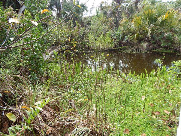 Pond Apple Park: Shipley Trail